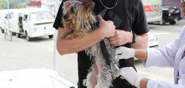 Sema alerta donos de cães sobre imunização contra a Cinomose