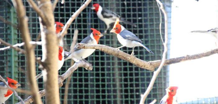 Cetas de Barueri recebe 203 aves resgatadas pela Polícia Ambiental